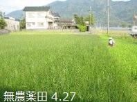 無農薬畳の田んぼB