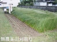 無農薬畳の田んぼの刈取り