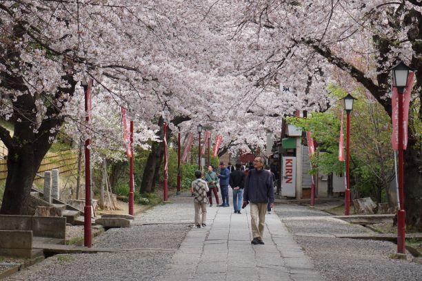 法華経寺の桜G