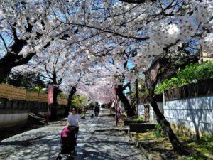 法華経寺の桜E