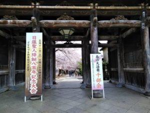 法華経寺の桜A