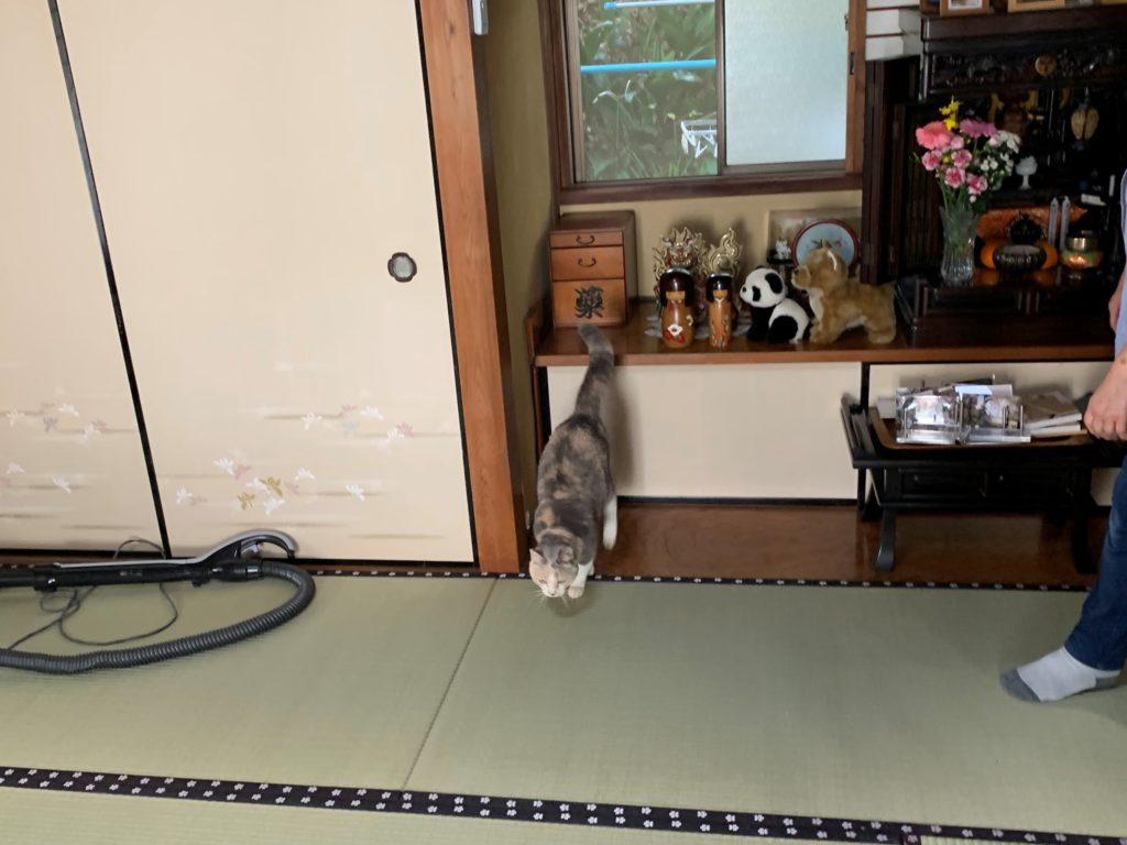 箱を降りる猫