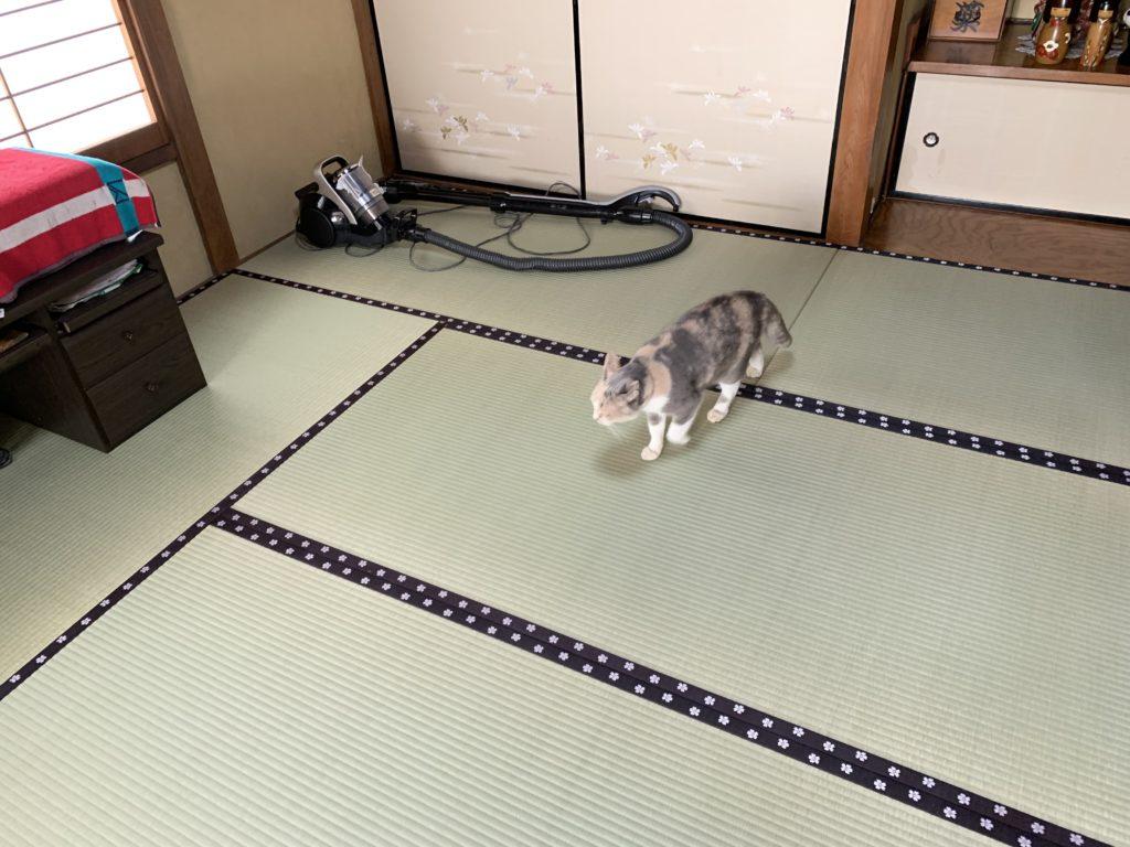 畳を歩く猫D